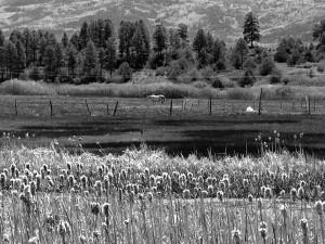 201206_Colorado_New Mexico_Foto Heike Zappe - 06