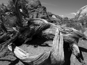 201205_Arches NP_Utah_Foto Heike Zappe - 128