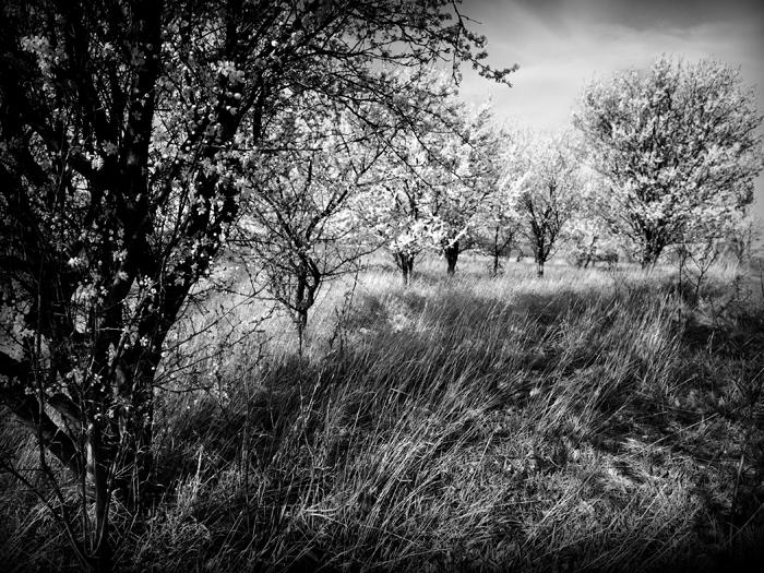 spring__foto heike zappe