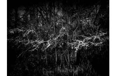gesträuch_frost_foto heike zappe