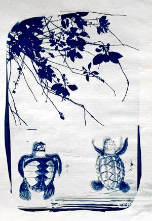 turtles_cyanotype_collage_heike zappe