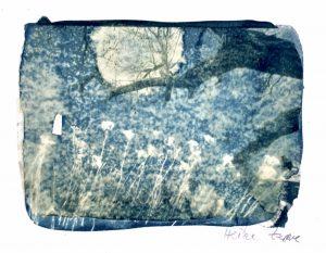 cyanotypie, fineart print, collage
